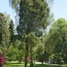 Bomenmuseum Doorn